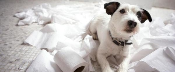 witte hond heeft in keuken alle toiletrollen afgerold